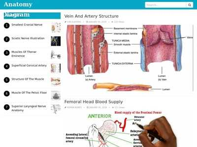 Human Anatomy Diagrams All About Human Anatomy Chart And Diagram